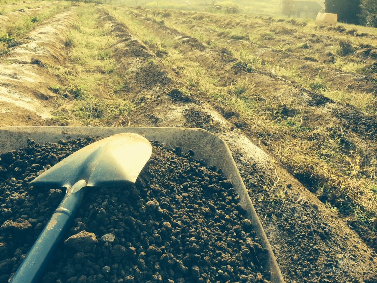 辛い、唐辛子の畑、自然農業